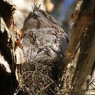 Can You Spot The Chick? by byronbackyard