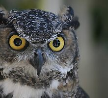 Great Horned Owl Eyes by JasonOConnell