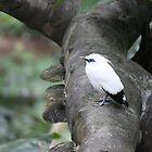 bird by Vincent0clt