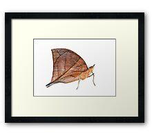Leaf Butterfly Framed Print