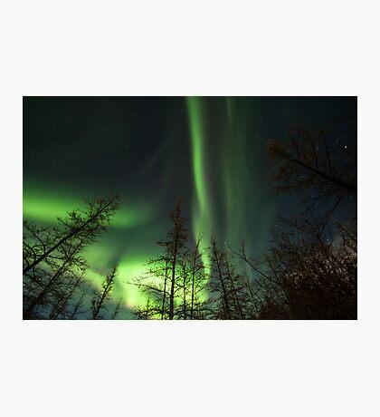 Yukon Northern Lights 1 Photographic Print