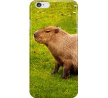 Capybara iPhone Case/Skin