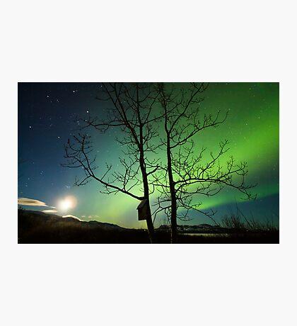 Yukon Northern Lights 2 Photographic Print
