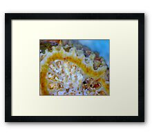 Transition (Fossil Coral) Framed Print