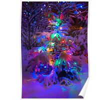 Colored lights on a snowy pine tree Poster