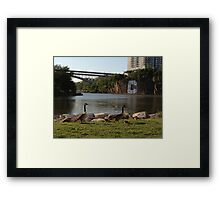 Inwood Hill Park Geese Framed Print
