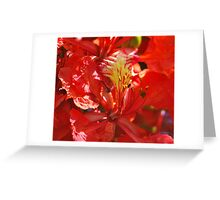 Flamboyant Red Flowers II Greeting Card