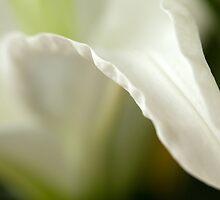 Lily White by Lynn Gedeon