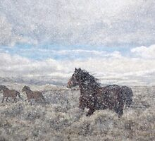 Winter Wilds by Arla M. Ruggles