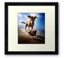 Isabella in her coconut levitation performance Framed Print
