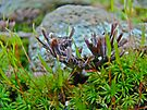 Little Brown Fingers in the Moss by MotherNature