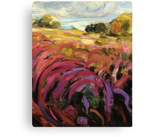 Purple Loosestrife Canvas Print