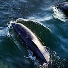 Costa Rica - Dolphin by mattnnat