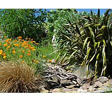 Dry creek bed Photographic Print