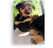 Grumpy Faced Rottweiler Puppy Lashes Out Canvas Print