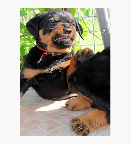 Grumpy Faced Rottweiler Puppy Lashes Out Photographic Print