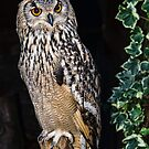 Eagle Owl by JEZ22