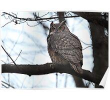 Late Light / Great Horned Owl Poster