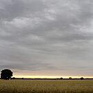 Last light of Sunset - Parkes - NSW - Australia by Norman Repacholi