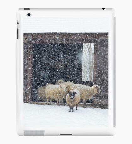 Winter Snow on Sheep iPad Case/Skin