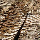 Woodworm Bark by KimSha