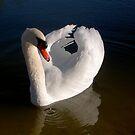 Elegant Swan by KimSha