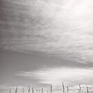Pleasure Craft - Coffs Harbour - NSW - Australia by Norman Repacholi