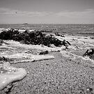 All washed up - Korora - NSW - Australia by Norman Repacholi