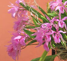 Lavender Cattleya Orchid Spray by Rosalie Scanlon