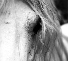 Horse by Gray Artus