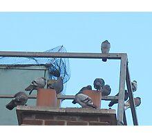 Pigeon tenement Photographic Print
