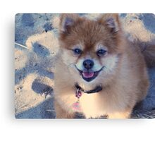 """Trixie says """"It is NEVER too cold to go to the beach! :) """" Canvas Print"""