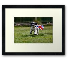 English Springer Spaniel Puppy with flag Framed Print
