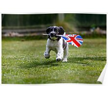 English Springer Spaniel Puppy with flag Poster
