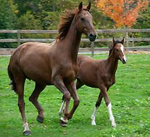 Proud mother horse with baby by Steven Olmstead