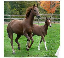 Proud mother horse with baby Poster