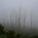 Foggy Trees by kcy011