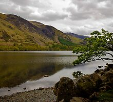 A tree by Lake Buttermere, Lake District, United Kingdom by Elana Bailey