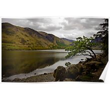 A tree by Lake Buttermere, Lake District, United Kingdom Poster
