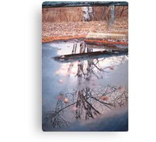 Birch Trees and Parking Barriers Canvas Print