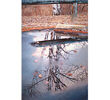 Birch Trees and Parking Barriers Photographic Print