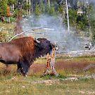 Bison Bark by JamesA1