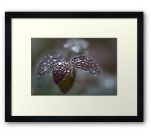 frozen drops Framed Print