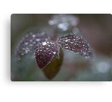 frozen drops Canvas Print