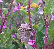 Wasps Nest by cjgaus