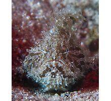 Crusty Angler Photographic Print