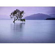 The Tree in the Lake Photographic Print