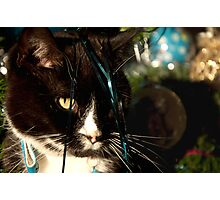 It's Christmas for the cats! Photographic Print