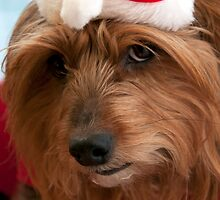 Skitsy at Christmas! by Maisie Sinclair