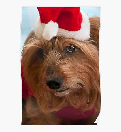 Skitsy at Christmas! Poster